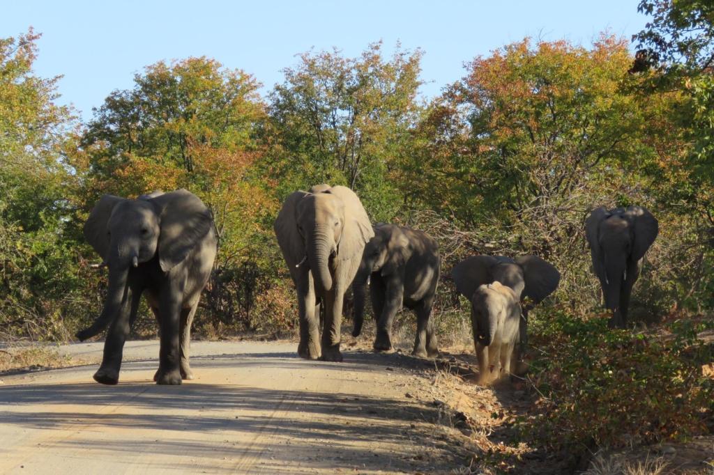 Kruger National Park - Olifanten op onverharde weg