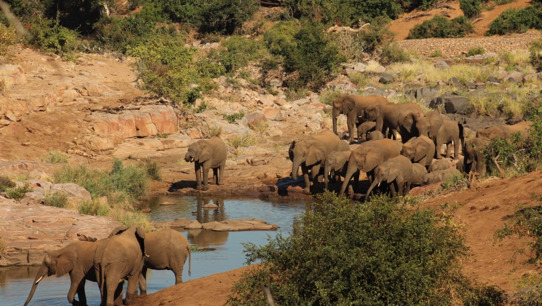 Kruger National Park - Olifanten drinken water