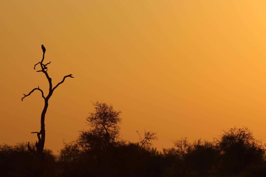 Zelf rijden in Kruger National Park - Silhouet van roofvogel bij zonsondergang