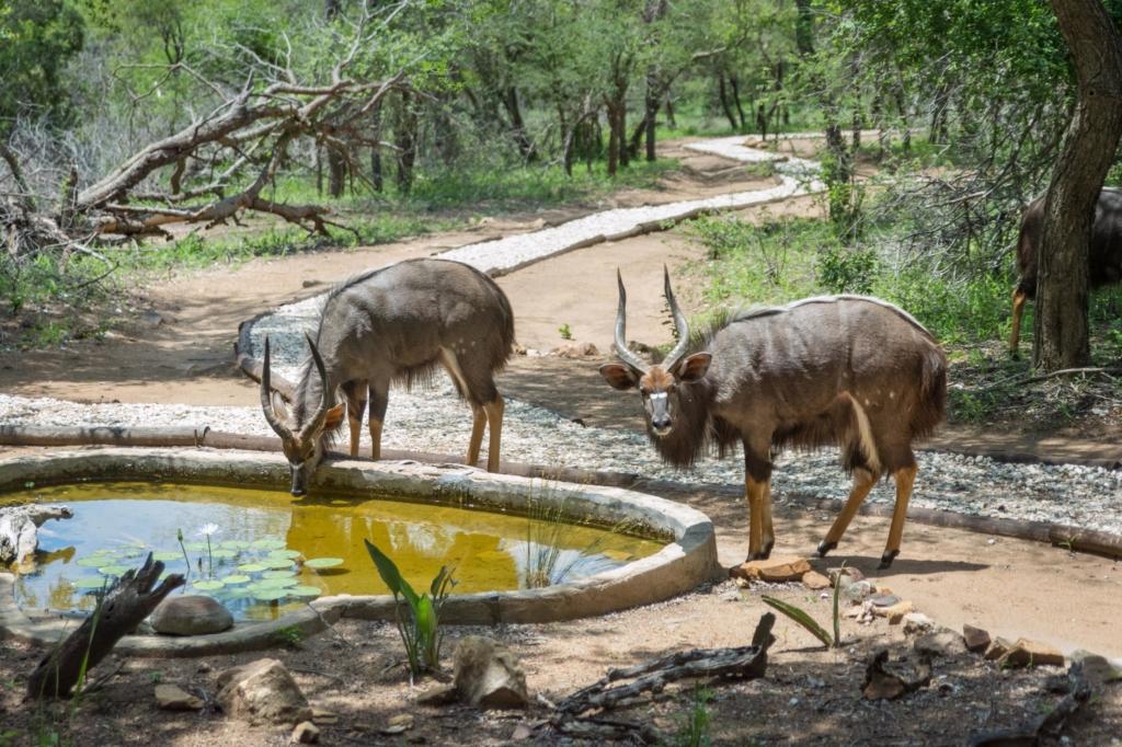 Beste reistijd Zuid-Afrika, tips per reisdoel - KwaMbili - Dieren in het kamp