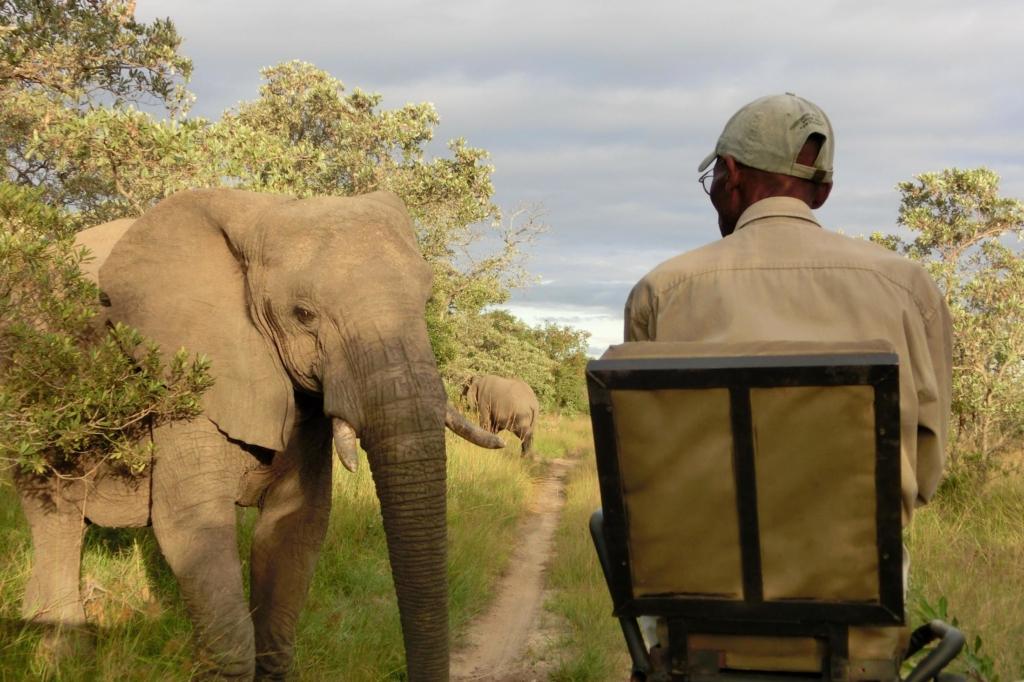 KwaMbili Lodge - Close encounter olifant