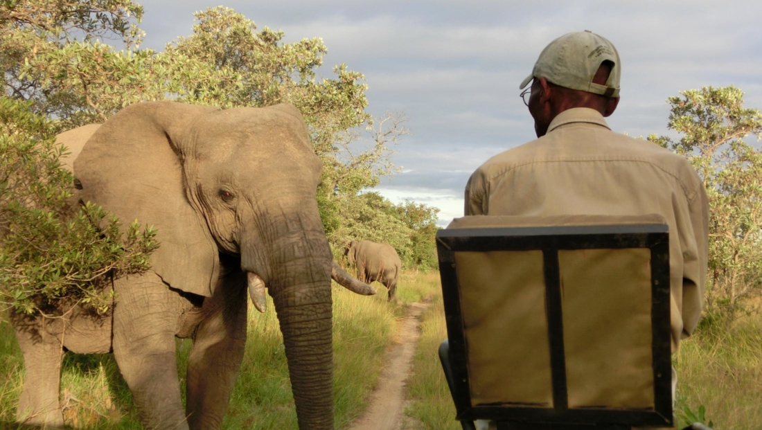 KwaMbili Lodge - Close encounter olifant