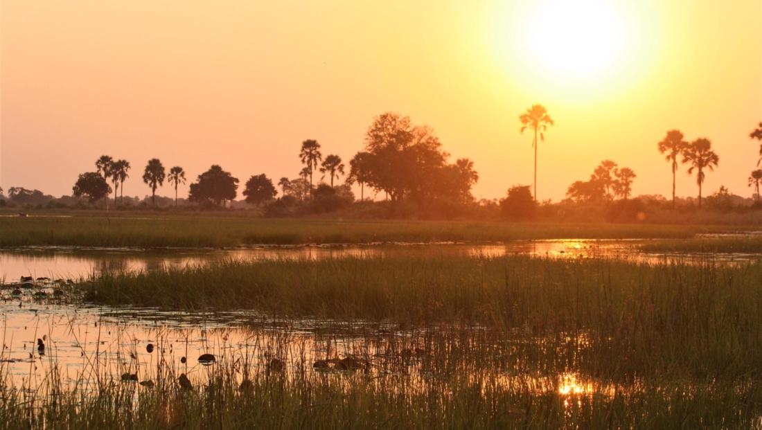 Okavango Delta - Zonsondergang