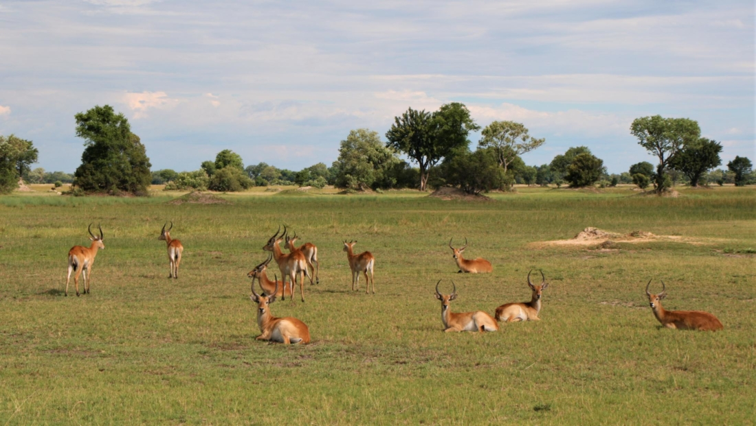 Okavango Delta - Open vlakte