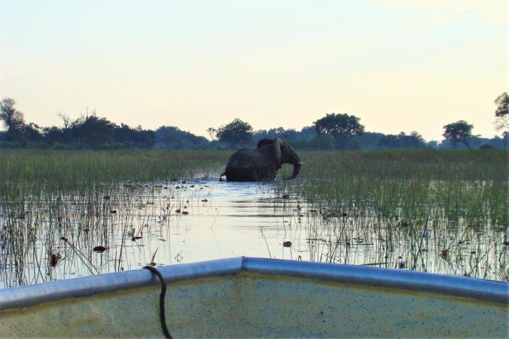 Okavango Delta - Olifant in het water