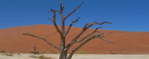 Sossusvlei - Eenzame boom Dead Vlei