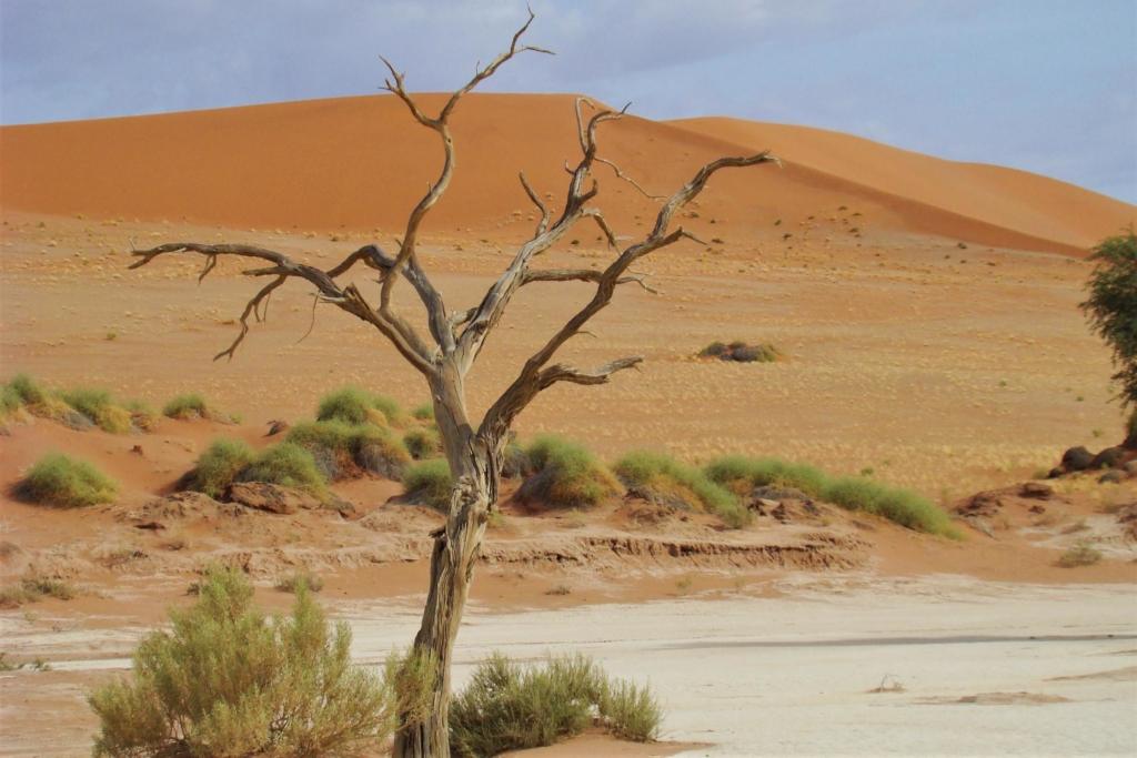Sossusvlei in het Namib Naukluft Park - Dode boom in Dead Vlei