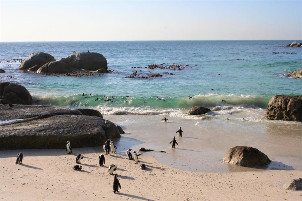 Actviteiten en excursies Zuid-Afrika - Pinguins bij Boulders Beach, Kaapstad