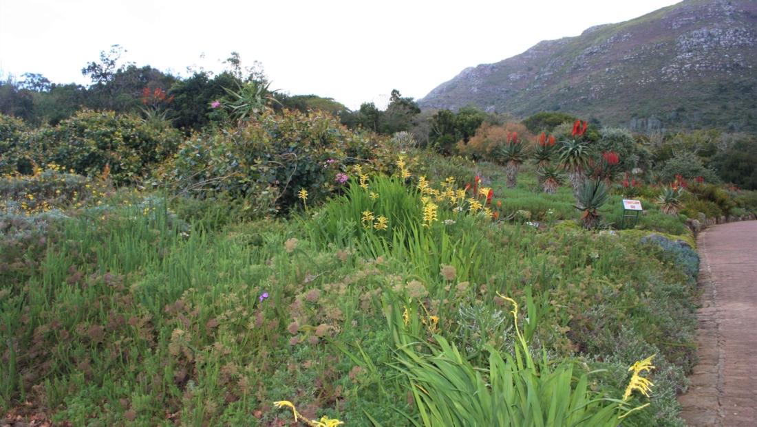 Kaapstad - Kirstenbosch Botanical Gardens