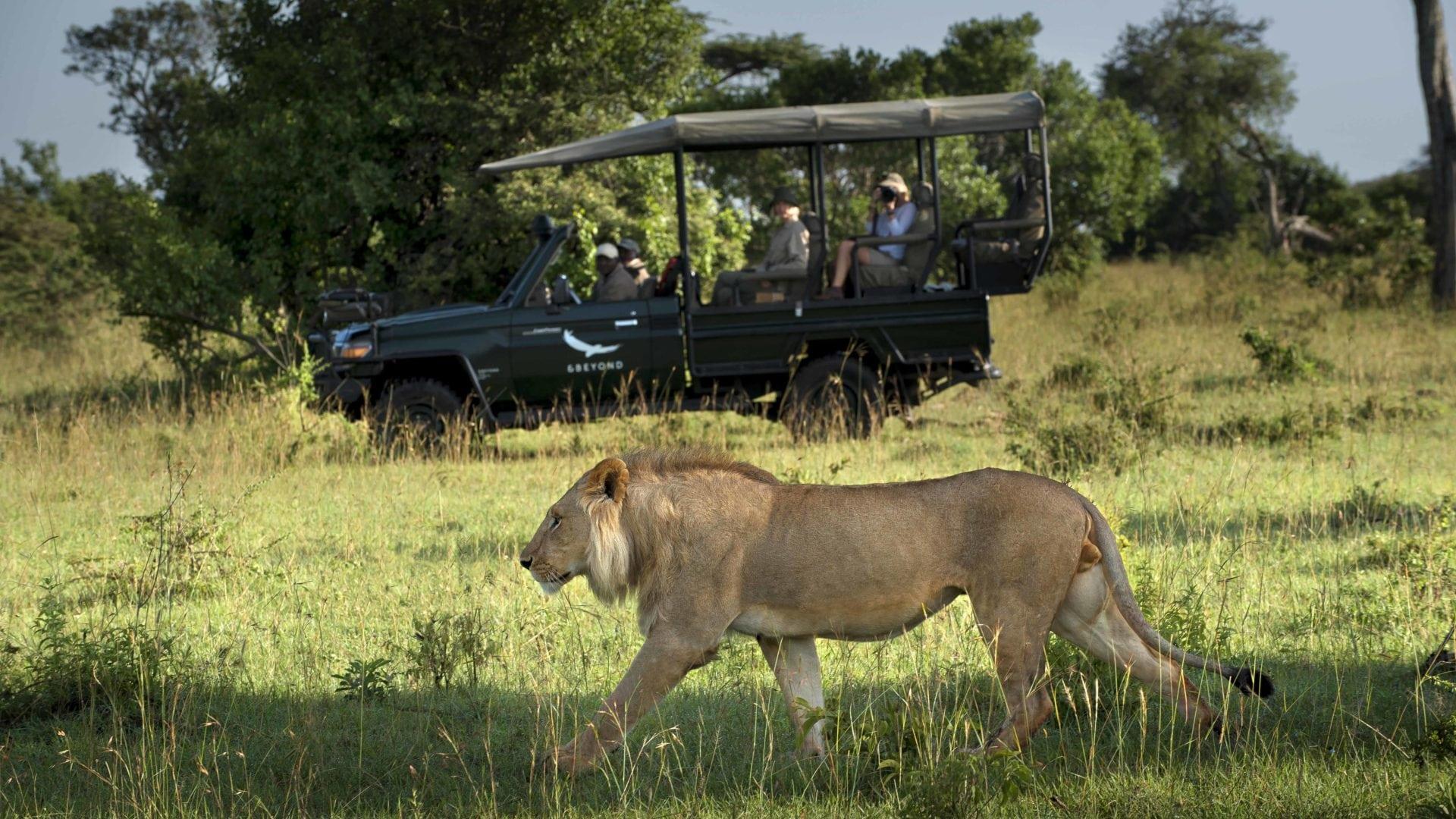 Luxe reizen Tanzania - Wildrit in open safari voertuig bij &Beyond Klein's Camp