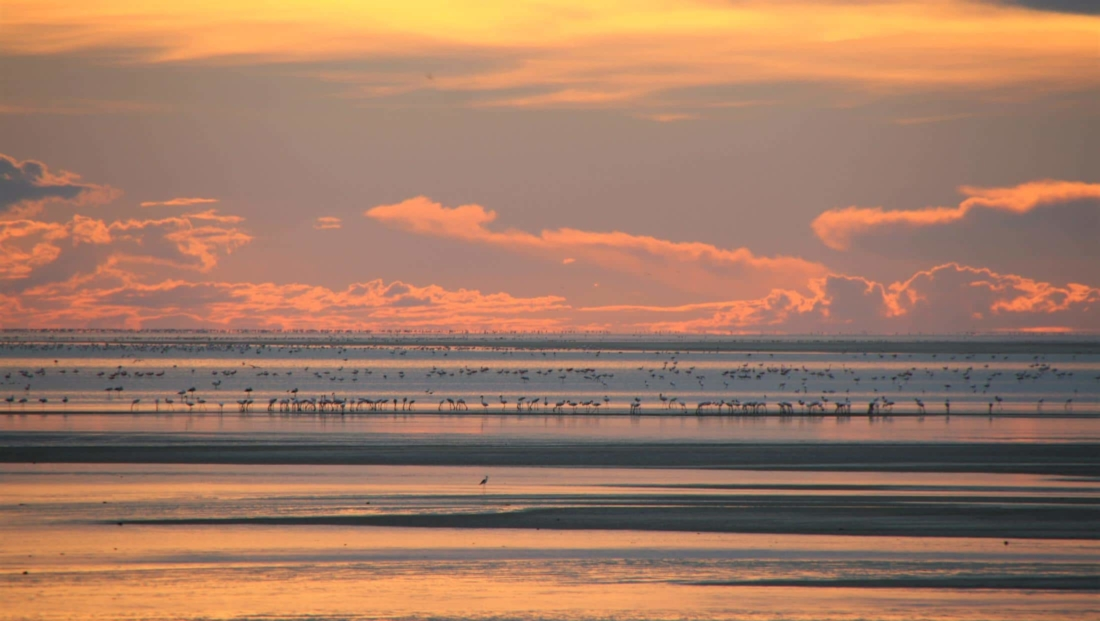 Makgadikgadi Zoutpannen - Flamingo's bij zonsondergang