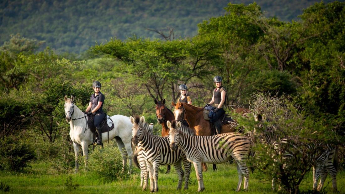 Ants Nest - Paardrijsafari met zebra's