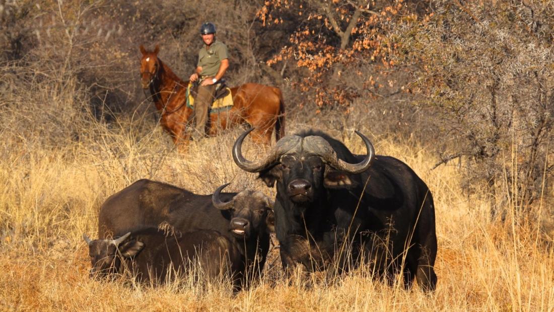 Ants Nest - Paardrijsafari met buffels