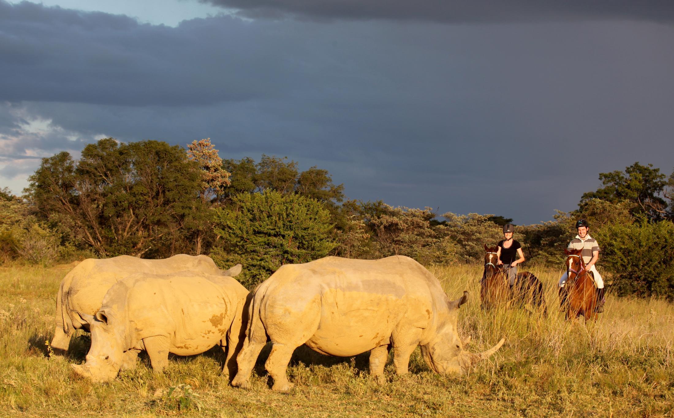 Paarden safari Afrika - Paardrijden in de Waterbergen met neushoorns