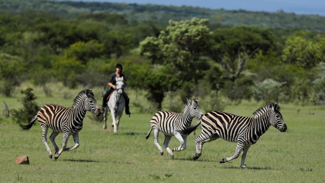 Ants Nest - Paardrijsafari galop met zebra's