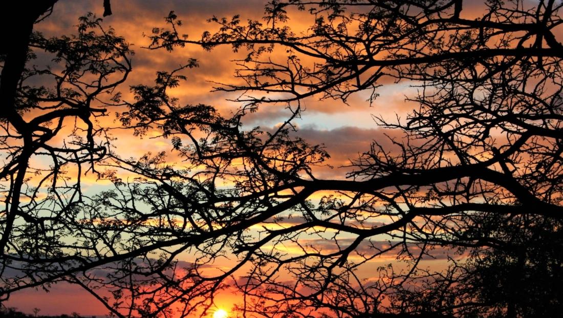 Hluhluwe-Imfolozi - Zonsondergang door bomen