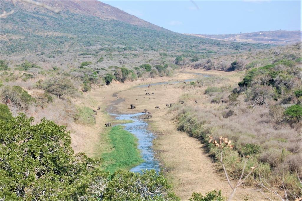 Bezienswaardigheden Zuid-Afrika - Uitzicht over rivierbedding met veel dieren in Hluhluwe-Imfolozi