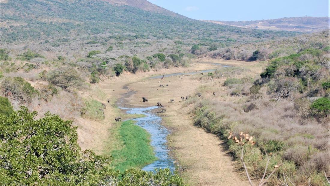 Hluhluwe-Imfolozi - Uitzicht rivierbedding - veel dieren