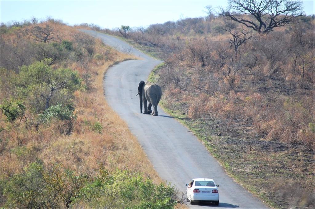 Tips per reisdoel Zuid-Afrika - Olifant op de web blokkeert doorgang voor auto in Hluhluwe-Imfolozi