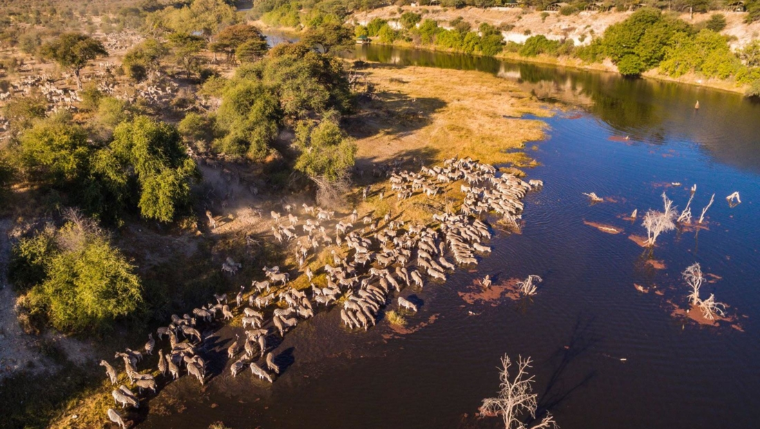 Meno a Kwena - Luchtfoto kudde zebra's drinkt water