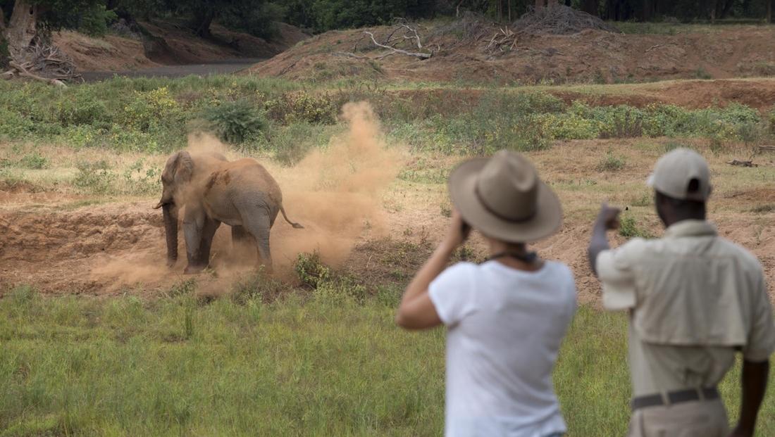 Pafuri Walking Safaris - Encounter met olifant tijdens safariwandeling
