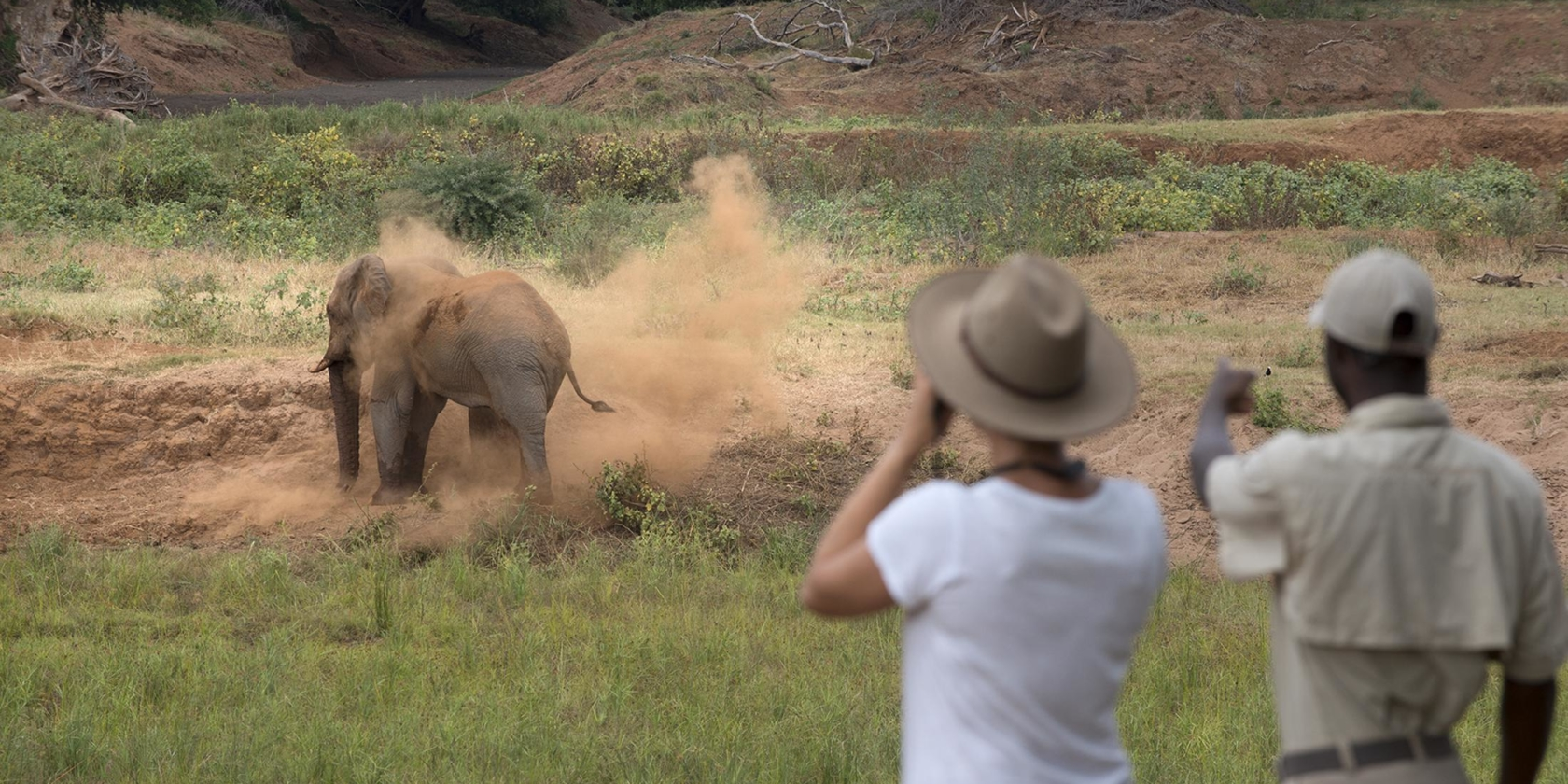 Pafuri Walking Safaris - Encounter met olifant tijdens safariwandeling