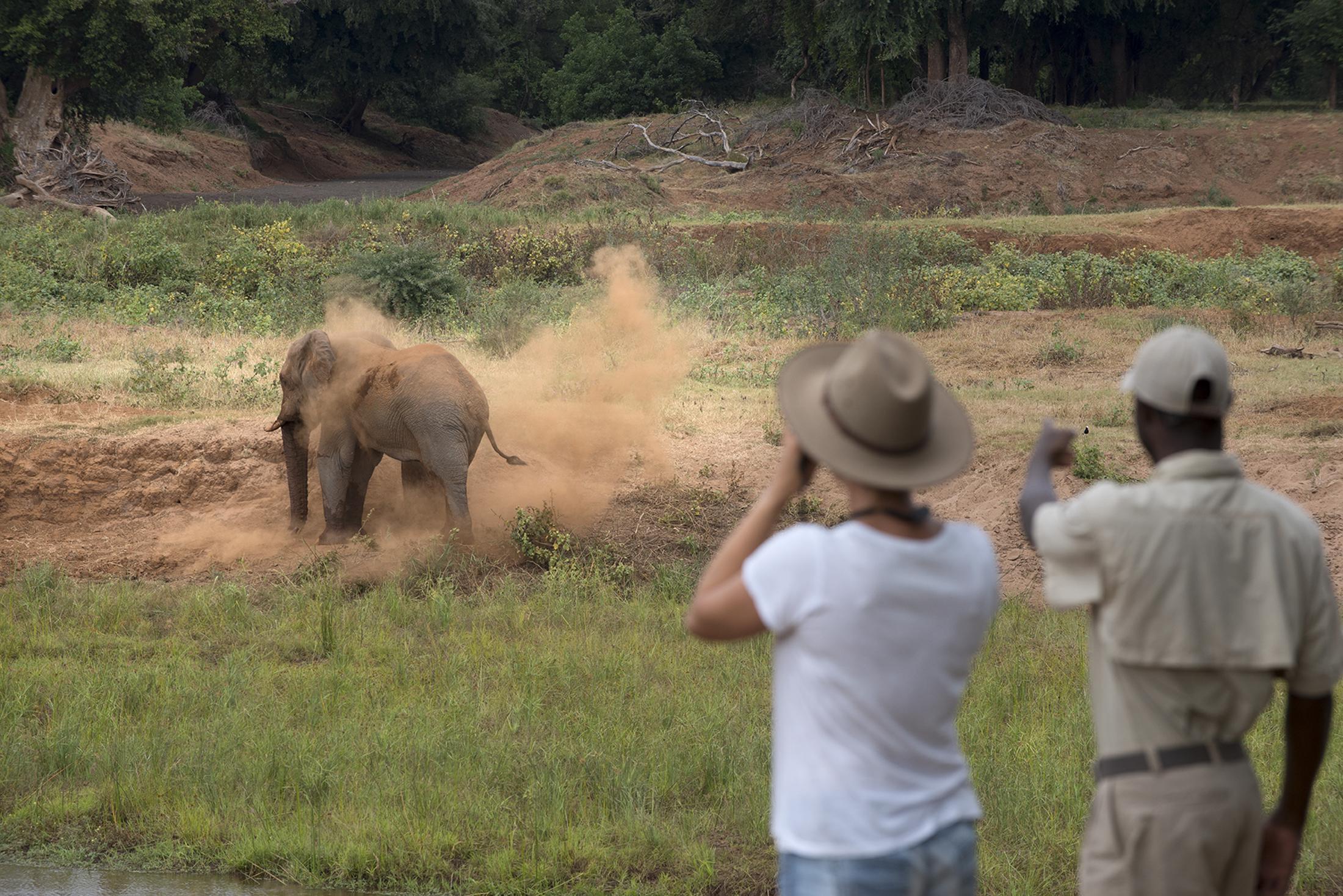 Safari & Natuur reizen - Olifant tijdens een wandelsafari in het noorden van het Kruger National Park