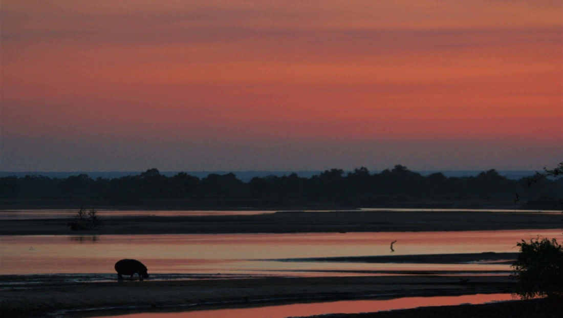 South Luangwa NP - Zonsondergang met nijlpaard op de voorgrond