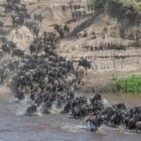 Serengeti NP - Migratie river crossing