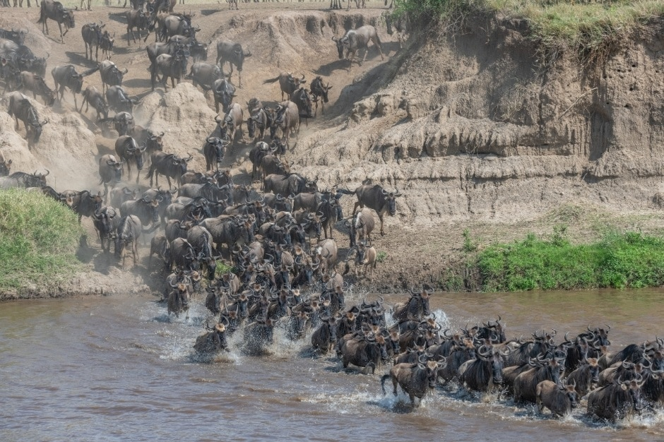 Serengeti NP - Migratie river crossing